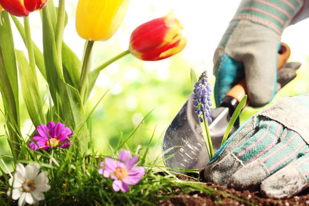 Cómo elegir un buen Servicio de Jardinería