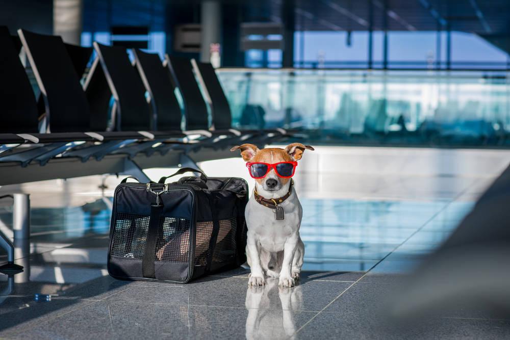 Formas para que una mascota viaje con nosotros