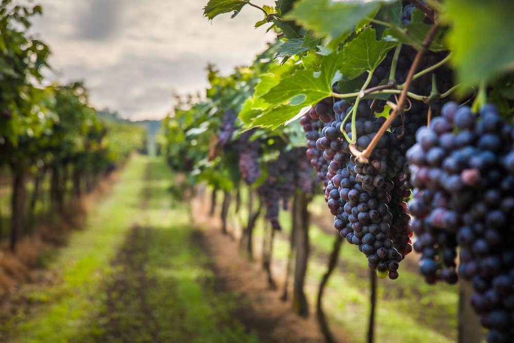 El vino, una apuesta cada vez más habitual entre las empresas de nuestro país